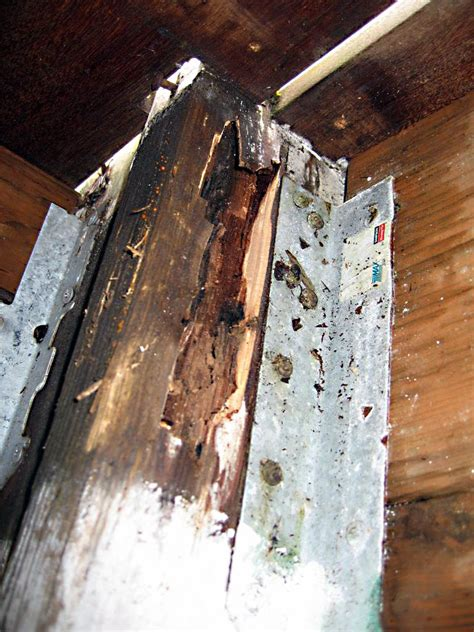 portlands premier dry rot repair experts