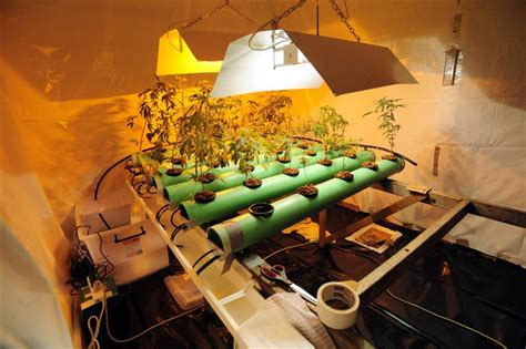 lade al sodio per coltivazione indoor grower s