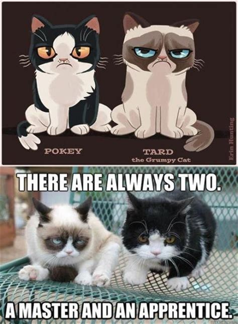 Star Wars Cat Meme - 389 best images about grumpy cat on pinterest grumpy cat