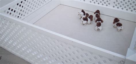 puppy whelping box the 3 best whelping boxes adapted to your breed