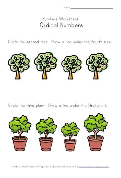 kindergarten activities on plants kindergarten plants worksheets