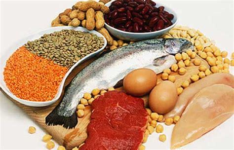lista de alimentos ricos em proteinas  fitness