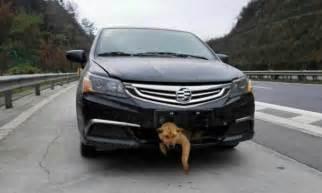 Hund Im Auto Transportieren by Hunde Im Auto Was Beim Transport Zu Beachten Ist