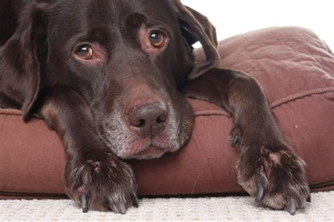signs of kidney disease in dogs what symptoms will a with kidney failure experience md health