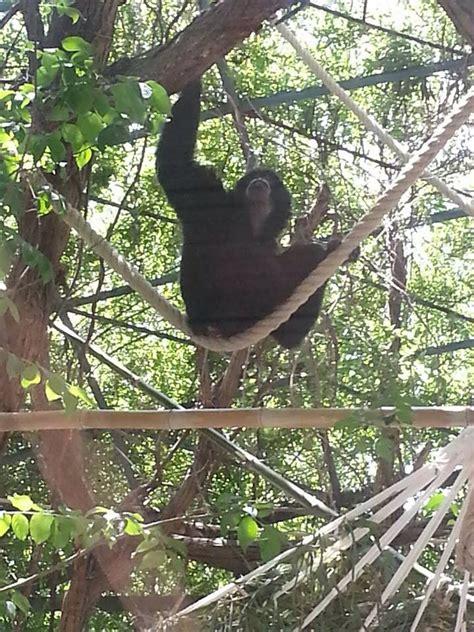 giardino zoologico napoli zoo di napoli