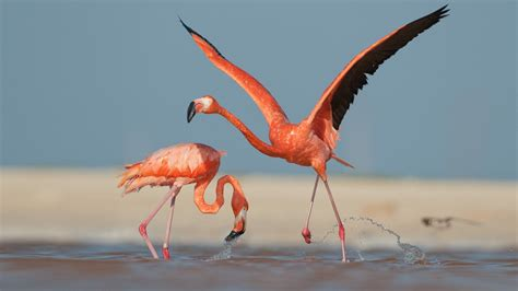Eagle Flamingo Grey Orange orange flamingo wallpaper widescreen hd wallpapers13