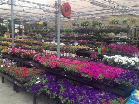 pelham walmart garden shop popping with color