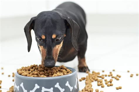 go commercial puppy how is commercial food regulated