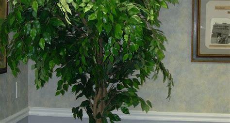 piante da arredo interno piante per interni piante appartamento piante da interno