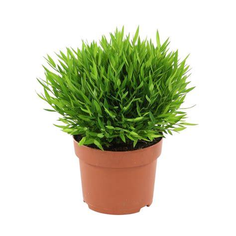 Plante Fleurie D Intérieur Facile D Entretien by Plantes Vivaces En Pot Fleurs En Pot Conseils Et Id Es