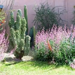 desert landscaping plants desert landscaping ideas