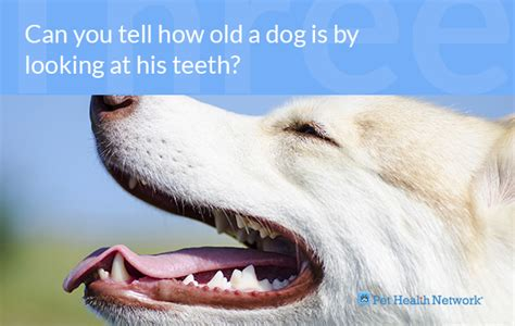 at what age do puppies get what age do puppies get teeth 4k wallpapers