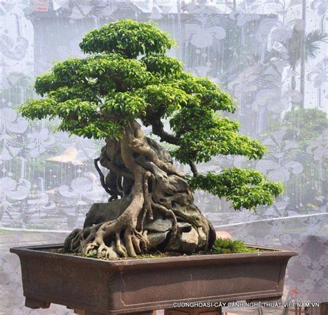 Root Over Rock Bonsai A Collection Of Ideas To Try About Bonsai Rock Garden