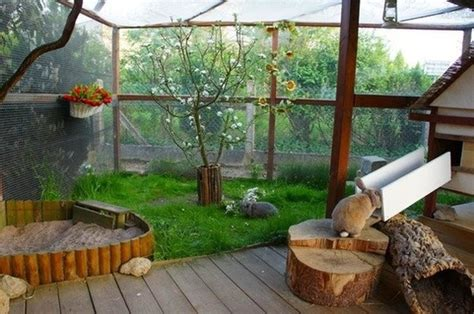 indoor garden for rabbits outdoor hutches bunnies at home