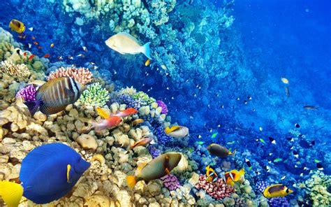 reef wallpaper nature hd desktop wallpapers 4k hd wallpaper underwater coral reef tropics fish ocean