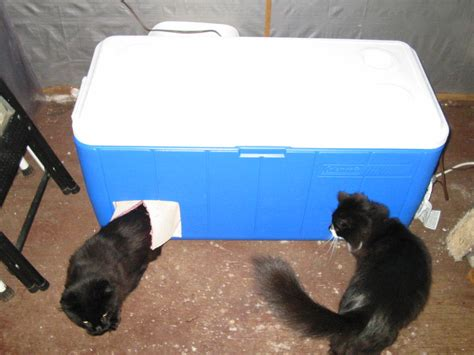 outdoor cat house for winter cat house