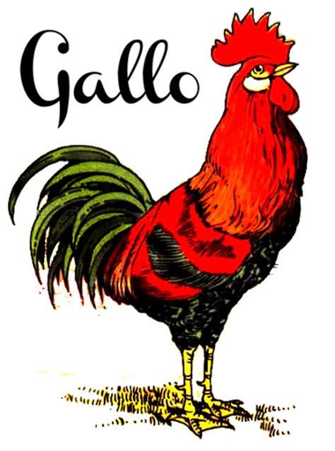 gallo a gallo on topsy one