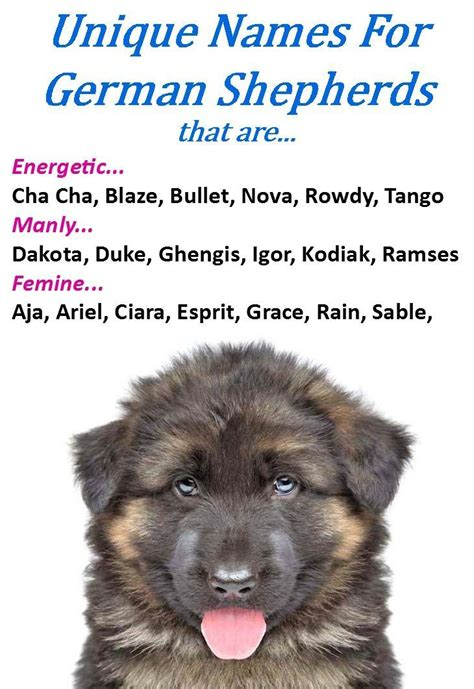 german puppy names german shepherd names gsd names german shepherd names german