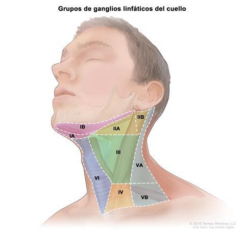 cuales son las cadenas ganglionares del cuello tratamiento del c 225 ncer de orofaringe pdq 174 versi 243 n para