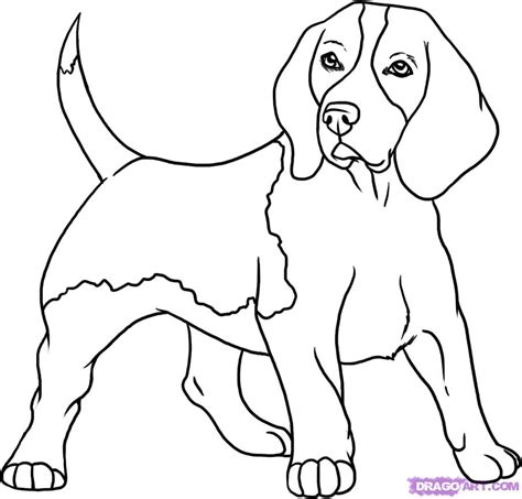 how to draw a puppy step by step how to draw a beagle step by step pets animals free drawing tutorial added