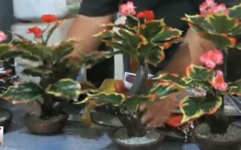 cara membuat pot bunga dari semen blog mang yono cara membuat miniatur pohon dari barang bekas