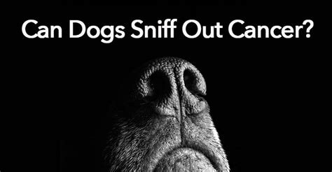 can dogs smell cancer can a really smell cancer in humans