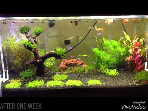 penyubur aquascape co2 by nd pets aquascape before and after one week diy co2