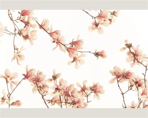 salmon pink wallpaper uk xxl wallpaper