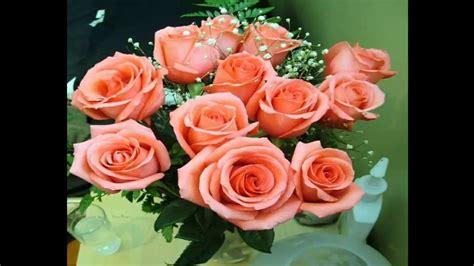 imagenes rosas mas bellas mundo las rosas mas hermosas del mundo y sus colores youtube