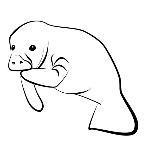 baby manatee drawing www imgkid com the image kid has it