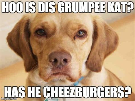 Disappointed Dog Meme - dog meme disappointed