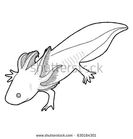 Axolotl Coloring Page by Grouse Animal Coloring Pages T8ls