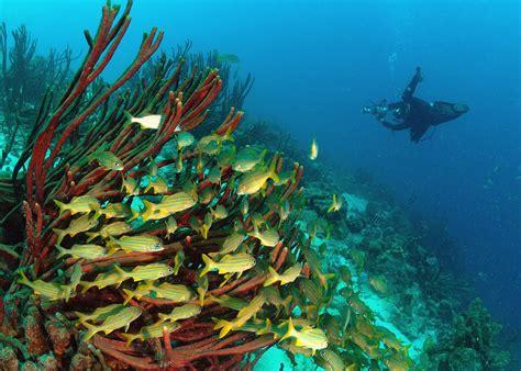 dive bari reef in explore dive site bari reef bonaire