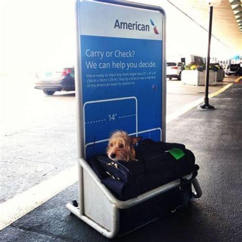 alitalia trasporto animali in cabina volare con fido il trasporto degli animali con le