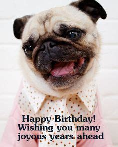 pug saying happy birthday wishing you a happy birthday in all greatquotes birthday