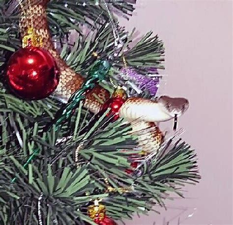 moving tinsel on woman s christmas tree is a tiger snake