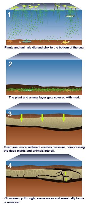 how fossils are formed diagram how are fossil fuels formed quotes