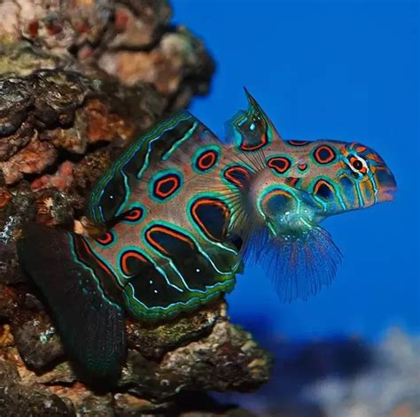 colorful saltwater fish why are saltwater fish more colorful than freshwater fish