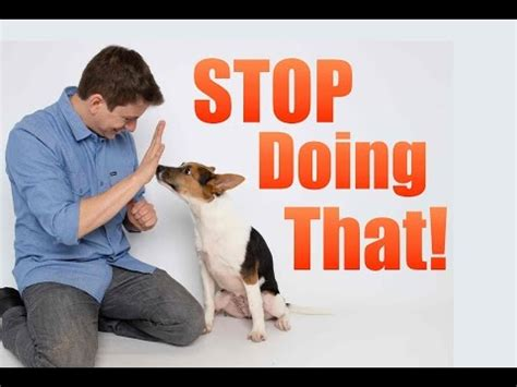 how to correct puppy biting how to stop puppy biting and don t do these 5 things wh doovi