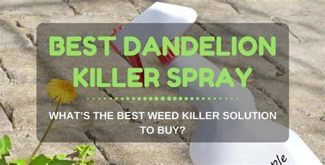 best killer best dandelion killer spray for lawns what s the best