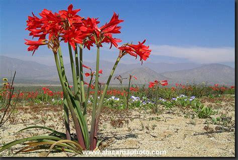 imagenes de flores silvestres chilenas condenados siente el miedo a 241 a 241 uca leyendas urbanas