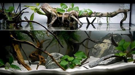 aquascape setup seriesroot   tree animalia kingdom