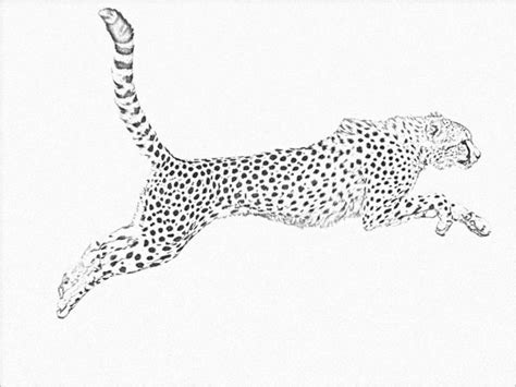 Running Cheetah Outline by Animal Drawings 25 Free Psd Ai Vector Eps Format Free Premium Templates