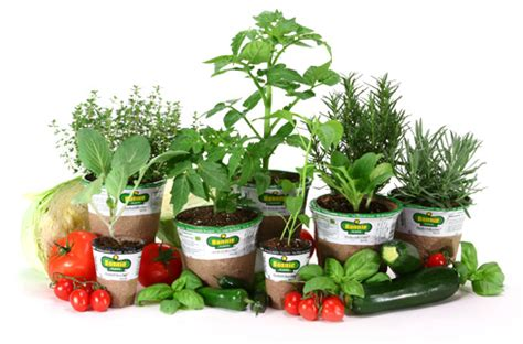 extreme couponing mommy  herbs vegetable plants