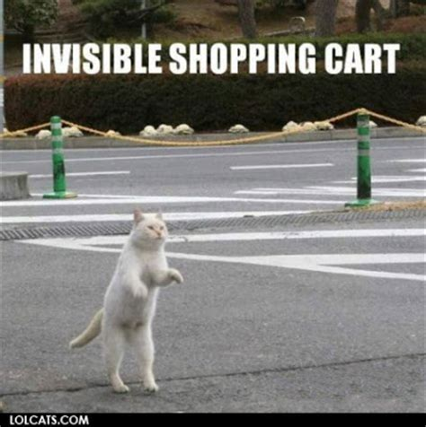 Invisible Cat Meme - daily lolcat invisible lolcats