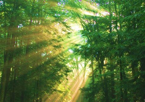 warm summer forest audio atmosphere