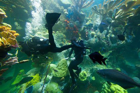 ocean design aquarium reviews new england aquarium giant ocean tank renovation bsa