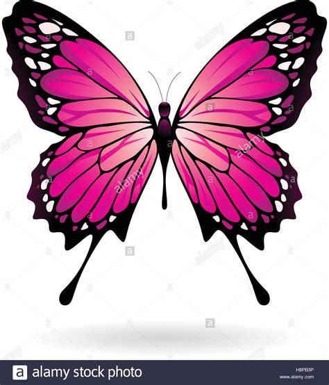 colorful butterfly vector illustration of a colorful butterfly isolated on a