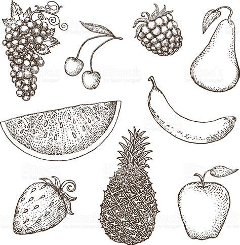 fruit drawings fruit drawings stock vector more images of apple