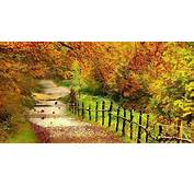 Wallpapers Beautiful Autumn Scenery